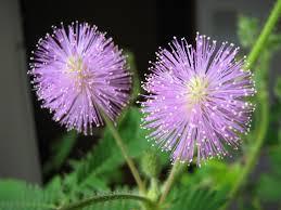 7171824a Prada Infusion De Mimosa